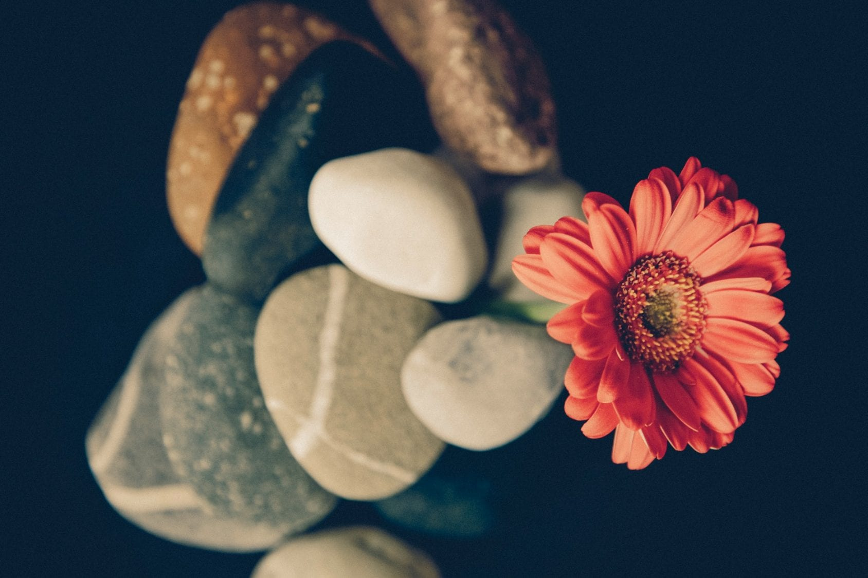 a flower pokes out from a bunch of stream pebbles